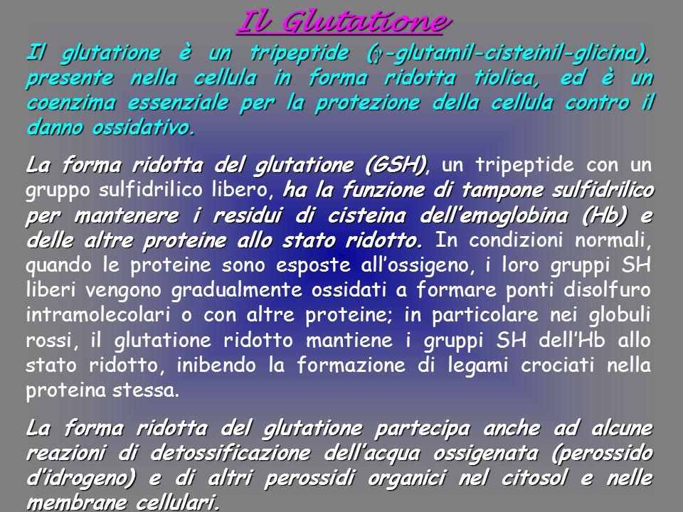 Il Glutatione Il glutatione è un tripeptide ( γ -glutamil-cisteinil-glicina), presente nella cellula in forma ridotta tiolica, ed è un coenzima essenziale per la protezione della cellula contro il danno ossidativo.