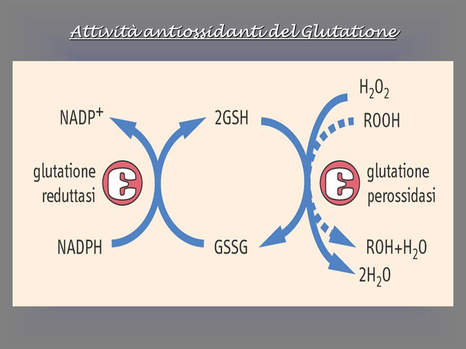 Attività antiossidanti del Glutatione