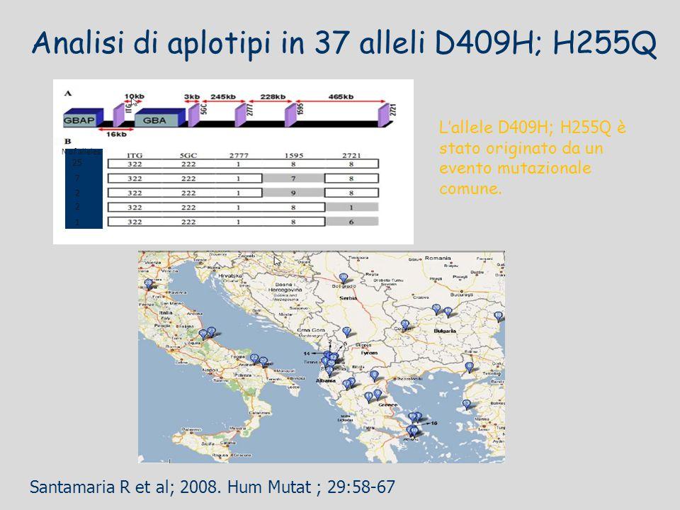 Analisi di aplotipi in 37 alleli D409H; H255Q L'allele D409H; H255Q è stato originato da un evento mutazionale comune. 25 7 2 1 2 N of alleles Santama