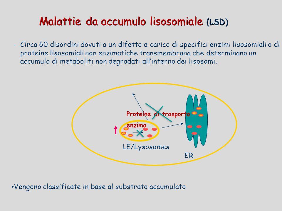  Circa 60 disordini dovuti a un difetto a carico di specifici enzimi lisosomiali o di proteine lisosomiali non enzimatiche transmembrana che determin