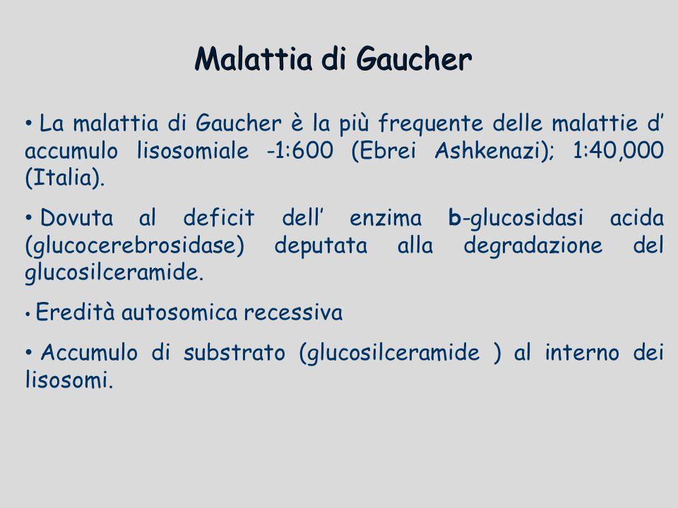 Malattia di Gaucher La malattia di Gaucher è la più frequente delle malattie d' accumulo lisosomiale -1:600 (Ebrei Ashkenazi); 1:40,000 (Italia). Dovu
