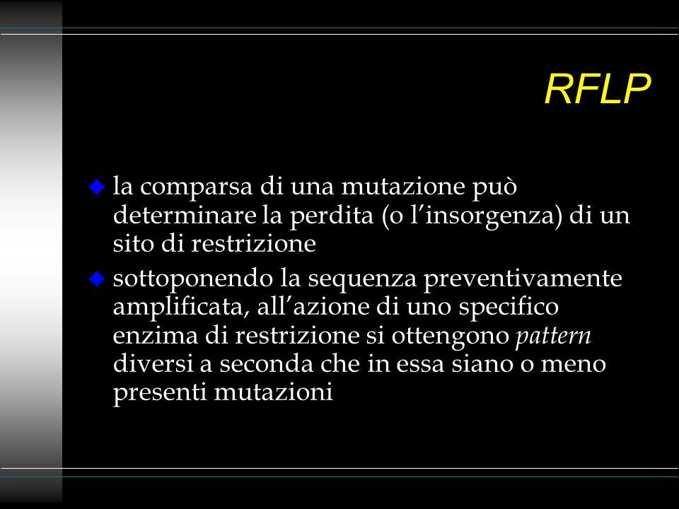 INNO-LiPA Rif-TB u amplificazione del gene rpo B del M.
