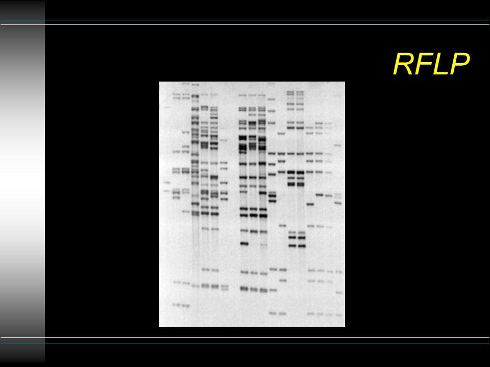 RFLP u la comparsa di una mutazione può determinare la perdita (o l'insorgenza) di un sito di restrizione u sottoponendo la sequenza preventivamente amplificata, all'azione di uno specifico enzima di restrizione si ottengono pattern diversi a seconda che in essa siano o meno presenti mutazioni