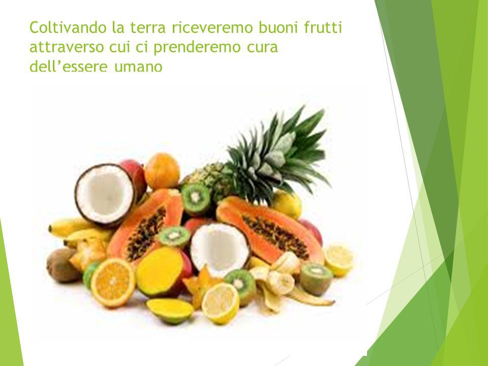 Coltivando la terra riceveremo buoni frutti attraverso cui ci prenderemo cura dell'essere umano