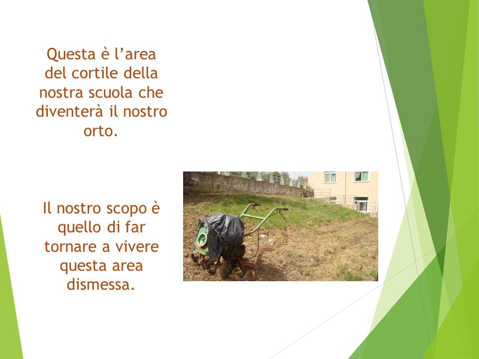 Questa è l'area del cortile della nostra scuola che diventerà il nostro orto.
