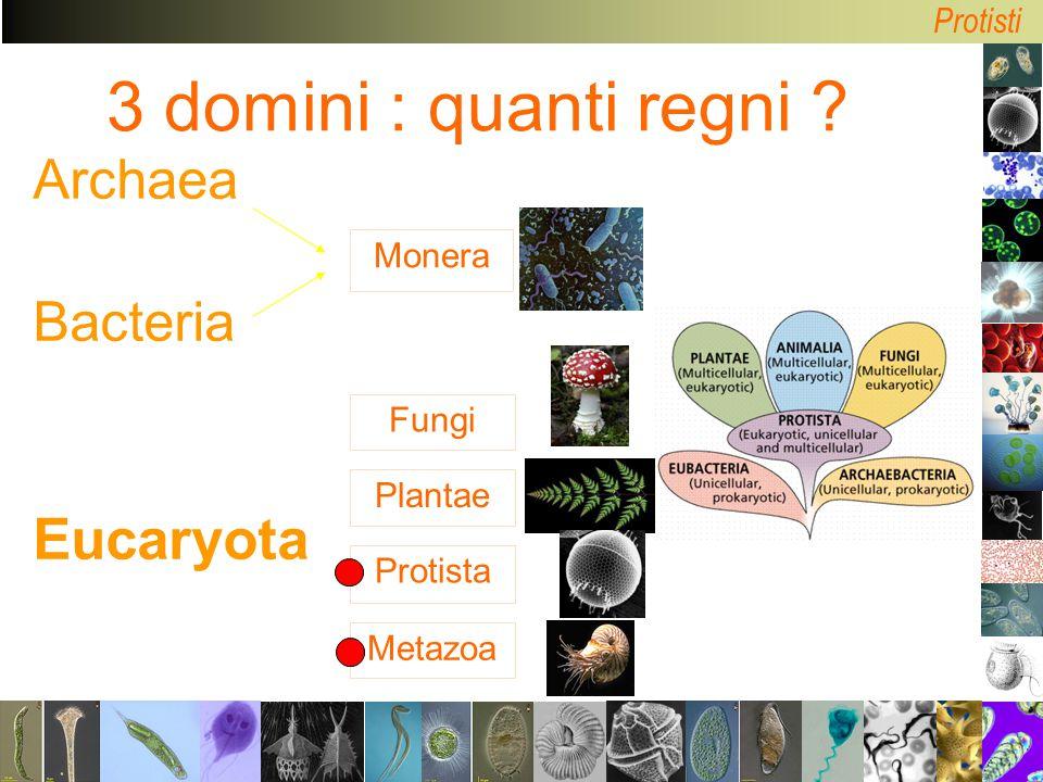 Protisti Monera Metazoa Protista Plantae Fungi 3 domini : quanti regni ? Archaea Bacteria Eucaryota