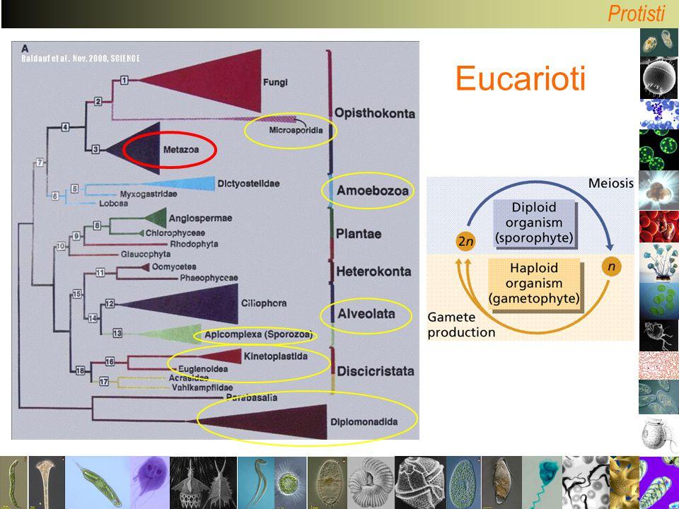Protisti Eucarioti
