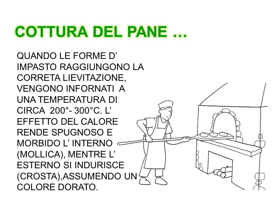 QUANDO LE FORME D' IMPASTO RAGGIUNGONO LA CORRETA LIEVITAZIONE, VENGONO INFORNATI A UNA TEMPERATURA DI CIRCA 200°- 300°C. L' EFFETTO DEL CALORE RENDE