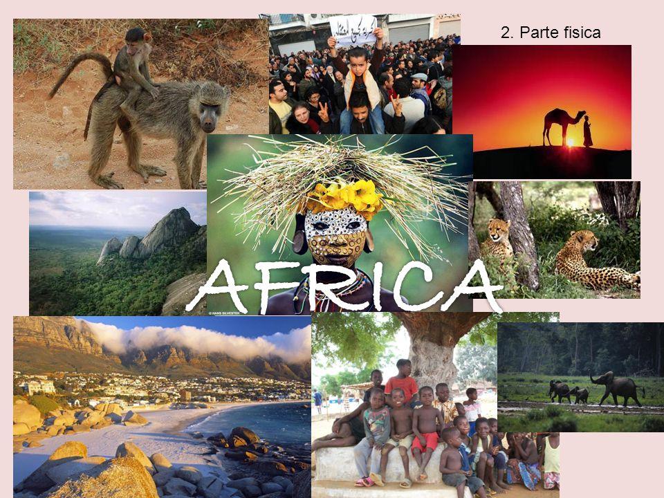 In Africa ci sono quattro fasce climatiche Clima arido Macchia mediterranea Clima tropicale Clima mediterranneo Assenza di vegetazione- Piante effimere o succulente Foresta pluviale Savane e praterie Clima equatoriale