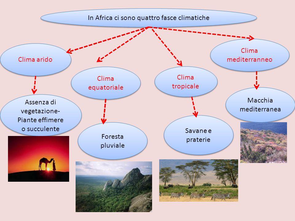 In Africa ci sono quattro fasce climatiche Clima arido Macchia mediterranea Clima tropicale Clima mediterranneo Assenza di vegetazione- Piante effimer