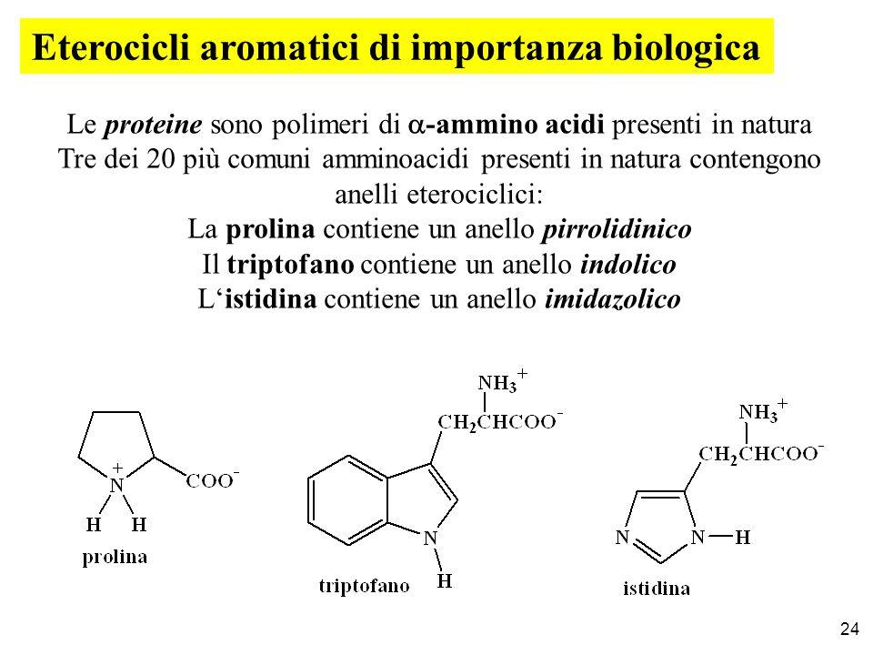 Le proteine sono polimeri di  -ammino acidi presenti in natura Tre dei 20 più comuni amminoacidi presenti in natura contengono anelli eterociclici: La prolina contiene un anello pirrolidinico Il triptofano contiene un anello indolico L'istidina contiene un anello imidazolico Eterocicli aromatici di importanza biologica 24