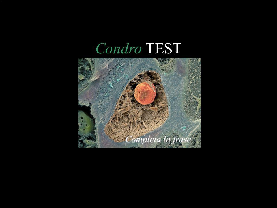 Condro TEST Completa la frase