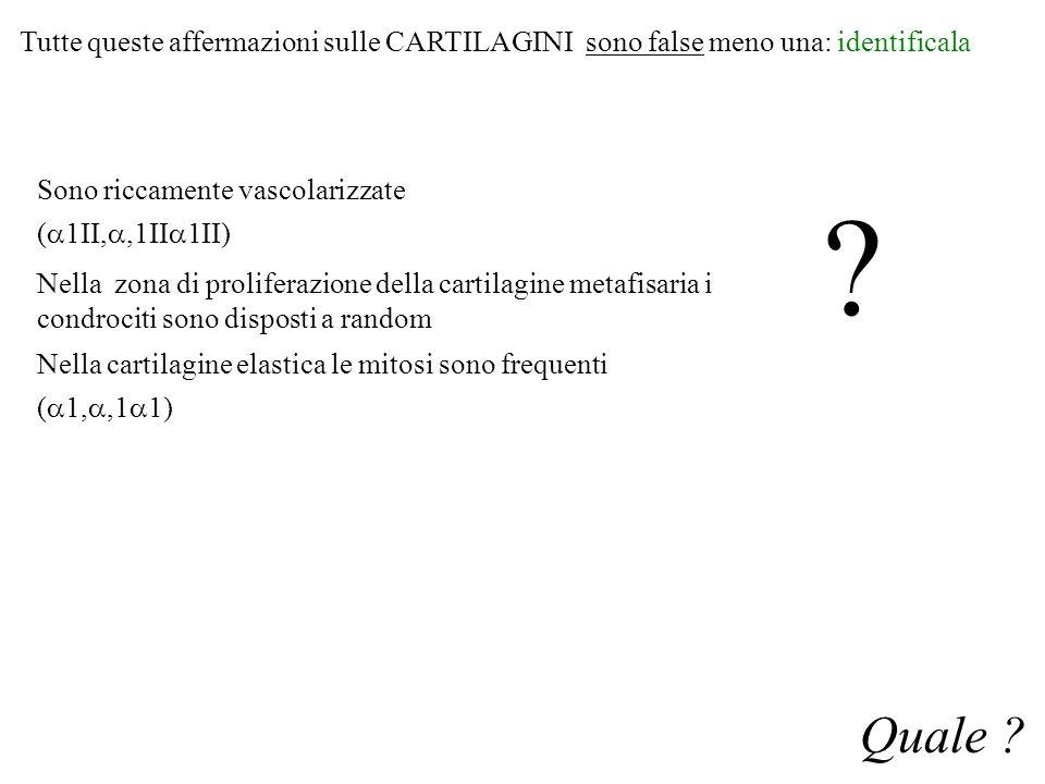 Tutte queste affermazioni sulle CARTILAGINI sono false meno una: identificala Quale ? Sono riccamente vascolarizzate (  1II, ,1II  1II) Nella zona