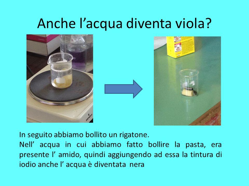 Anche l'acqua diventa viola? In seguito abbiamo bollito un rigatone. Nell' acqua in cui abbiamo fatto bollire la pasta, era presente l' amido, quindi