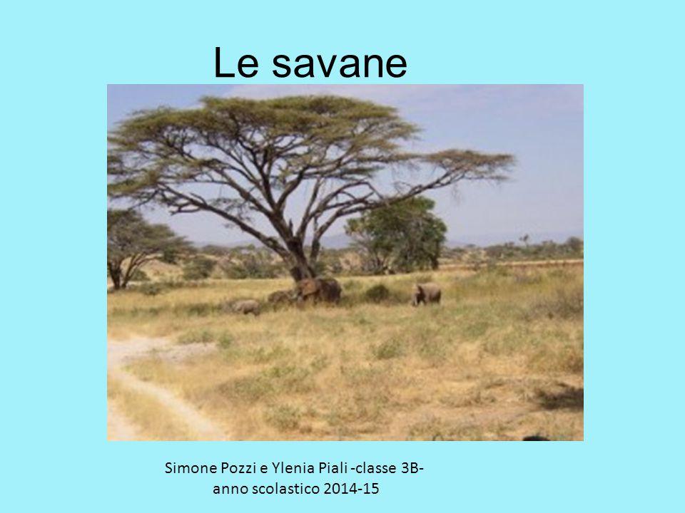 Le savane Simone Pozzi e Ylenia Piali -classe 3B- anno scolastico 2014-15