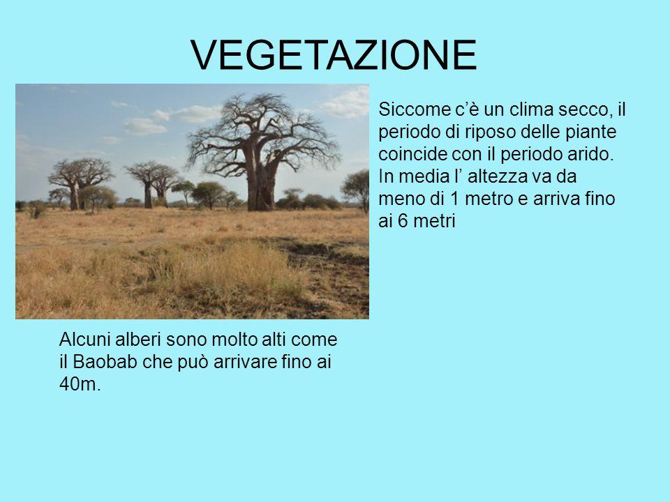 VEGETAZIONE Siccome c'è un clima secco, il periodo di riposo delle piante coincide con il periodo arido. In media l' altezza va da meno di 1 metro e a
