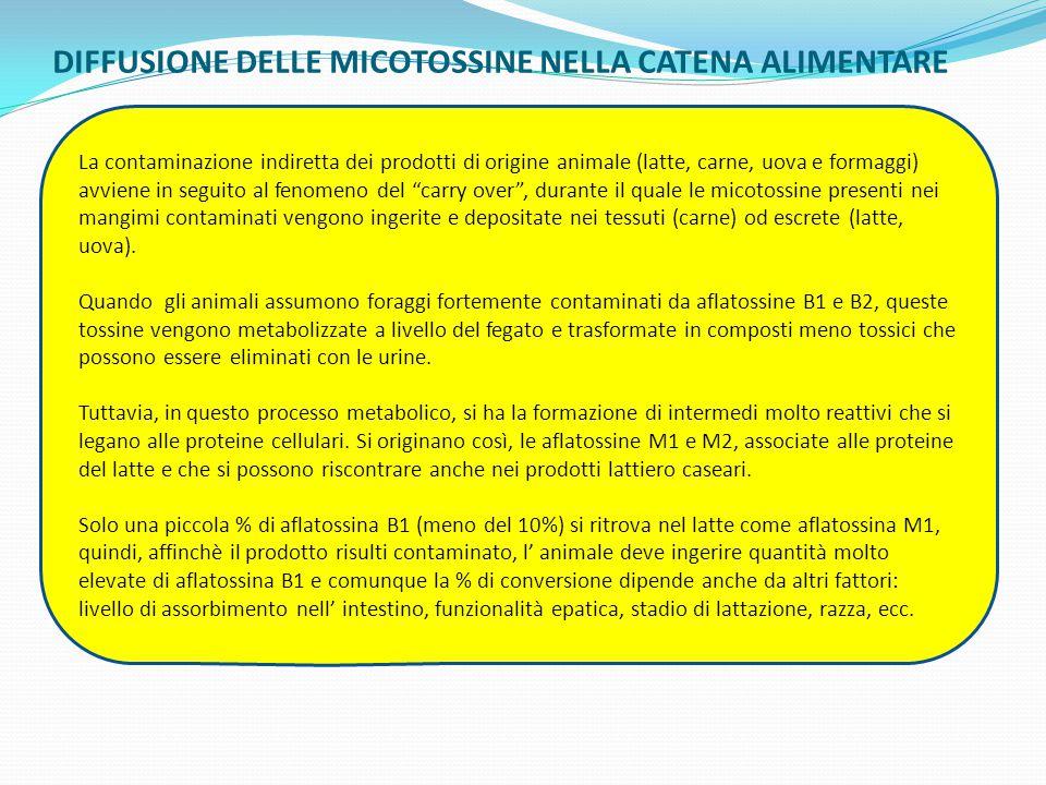 DIFFUSIONE DELLE MICOTOSSINE NELLA CATENA ALIMENTARE Micotossine La contaminazione indiretta dei prodotti di origine animale (latte, carne, uova e for