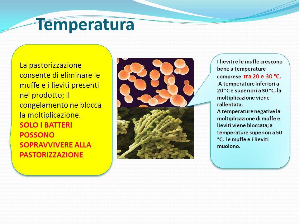 Temperatura I lieviti e le muffe crescono bene a temperature comprese tra 20 e 30 °C. A temperature inferiori a 20 °C e superiori a 30 °C, la moltipli