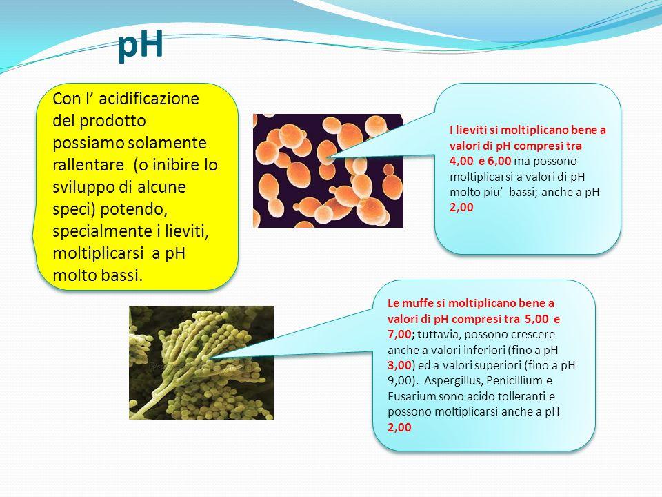 Ossigeno Alcune speci di lieviti sono aerobie strette e, pertanto, hanno un metabolismo di tipo respiratorio; altre hanno un metabolismo di tipo fermentativo e possono moltiplicarsi anche in assenza di ossigeno A parte qualche caso raro, le muffe sono aerobie strette ed hanno difficoltà a moltiplicarsi a valori di ossigeno inferiori all' 1% L' impiego dell' atmosfera protettiva con % di ossigeno inferiori all' 1% per la conservazione degli alimenti blocca la moltiplicazione delle muffe ma non dei lieviti (la cui moltiplicazione viene solamente rallentata).
