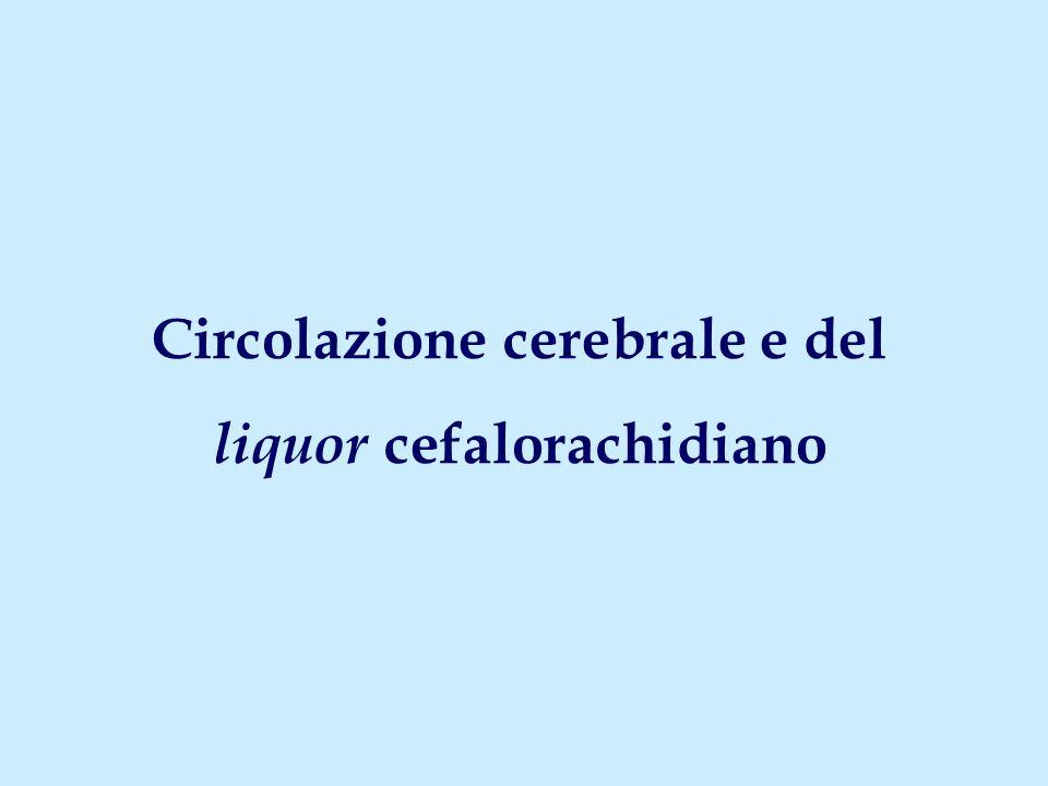Circolazione cerebrale e del liquor cefalorachidiano