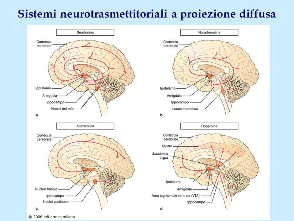 Sistemi neurotrasmettitoriali a proiezione diffusa