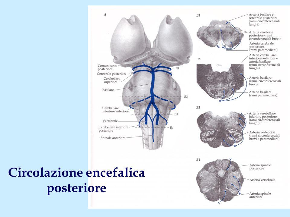 Circolazione encefalica posteriore
