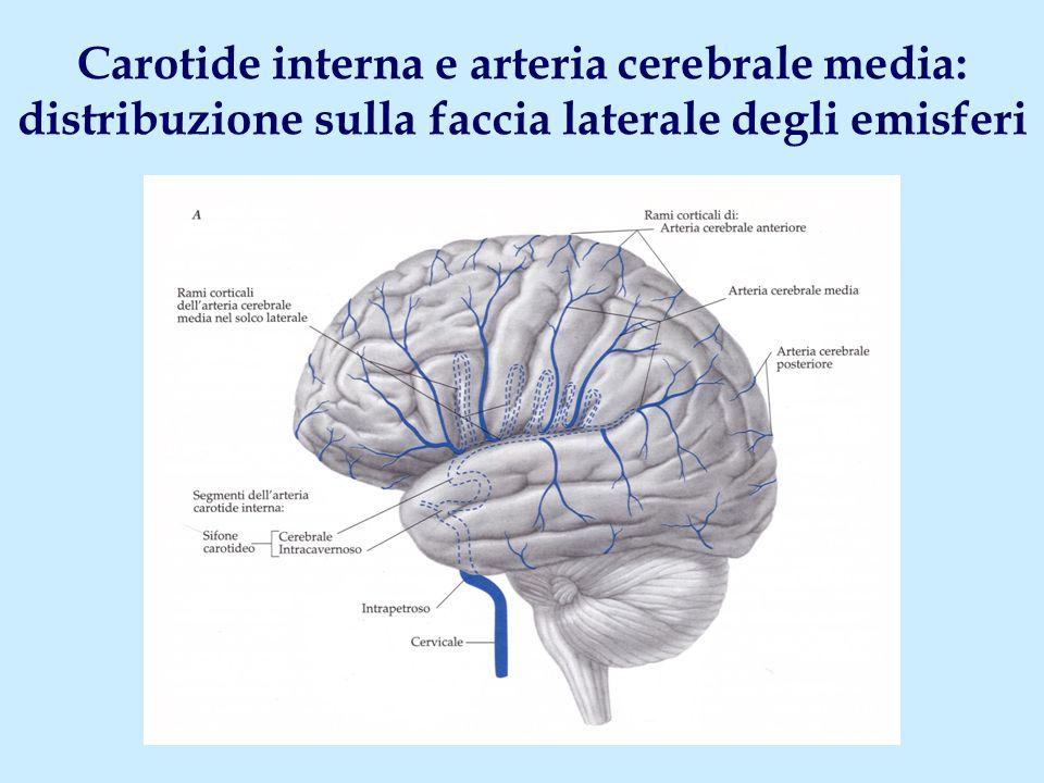 Carotide interna e arteria cerebrale media: distribuzione sulla faccia laterale degli emisferi