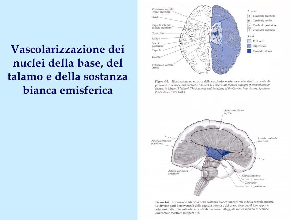 Vascolarizzazione dei nuclei della base, del talamo e della sostanza bianca emisferica