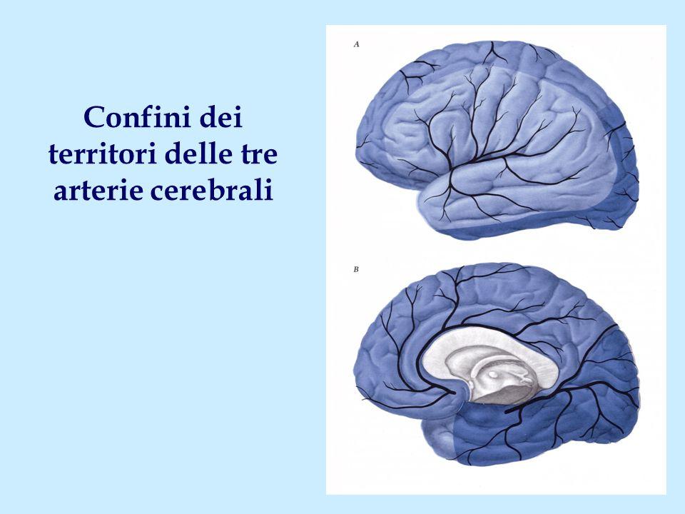 Confini dei territori delle tre arterie cerebrali