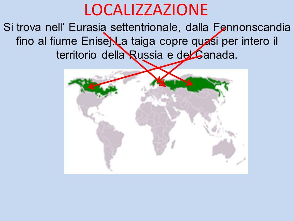 LOCALIZZAZIONE Si trova nell' Eurasia settentrionale, dalla Fennonscandia fino al fiume Enisej.La taiga copre quasi per intero il territorio della Rus