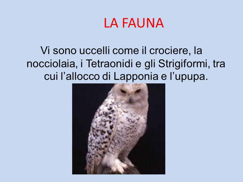 LA FAUNA Vi sono uccelli come il crociere, la nocciolaia, i Tetraonidi e gli Strigiformi, tra cui l'allocco di Lapponia e l'upupa.