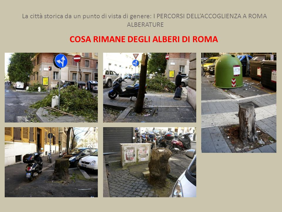 La città storica da un punto di vista di genere: I PERCORSI DELL'ACCOGLIENZA A ROMA ALBERATURE COSA RIMANE DEGLI ALBERI DI ROMA