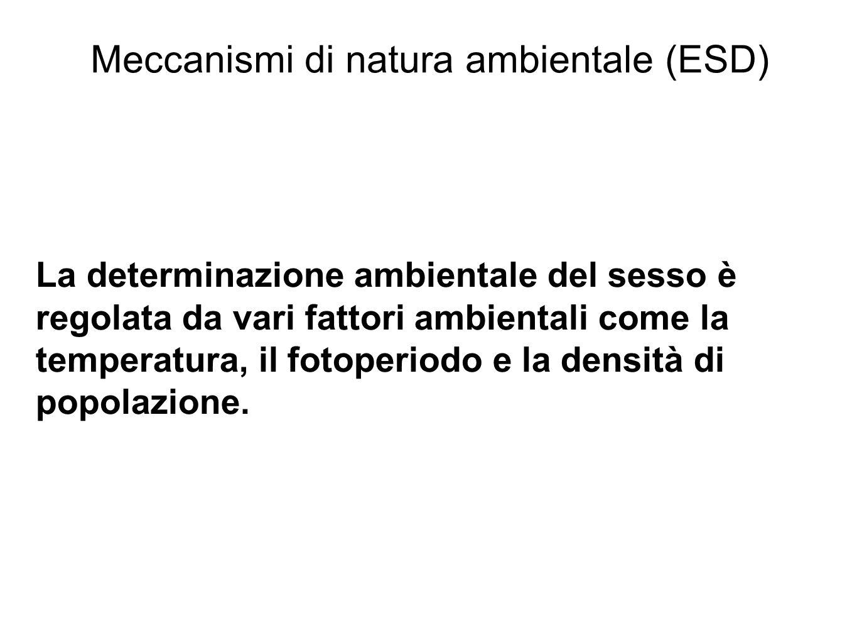 Meccanismi di natura ambientale (ESD) La determinazione ambientale del sesso è regolata da vari fattori ambientali come la temperatura, il fotoperiodo e la densità di popolazione.