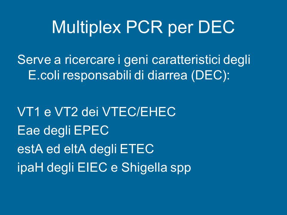 Multiplex PCR per DEC Serve a ricercare i geni caratteristici degli E.coli responsabili di diarrea (DEC): VT1 e VT2 dei VTEC/EHEC Eae degli EPEC estA ed eltA degli ETEC ipaH degli EIEC e Shigella spp