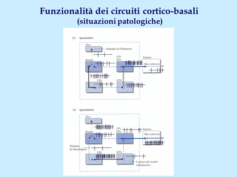 Funzionalità dei circuiti cortico-basali (situazioni patologiche)