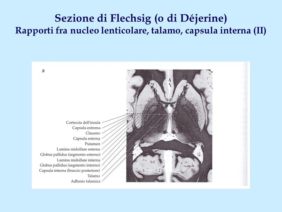 Sezione di Flechsig (o di Déjerine) Rapporti fra nucleo lenticolare, talamo, capsula interna (II)