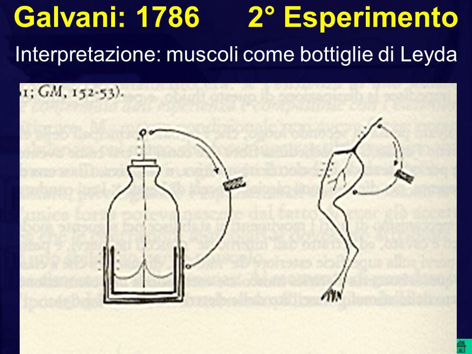 Galvani: 1786 2° Esperimento Interpretazione: muscoli come bottiglie di Leyda