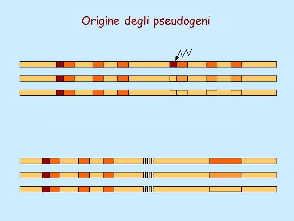 Origine degli pseudogeni