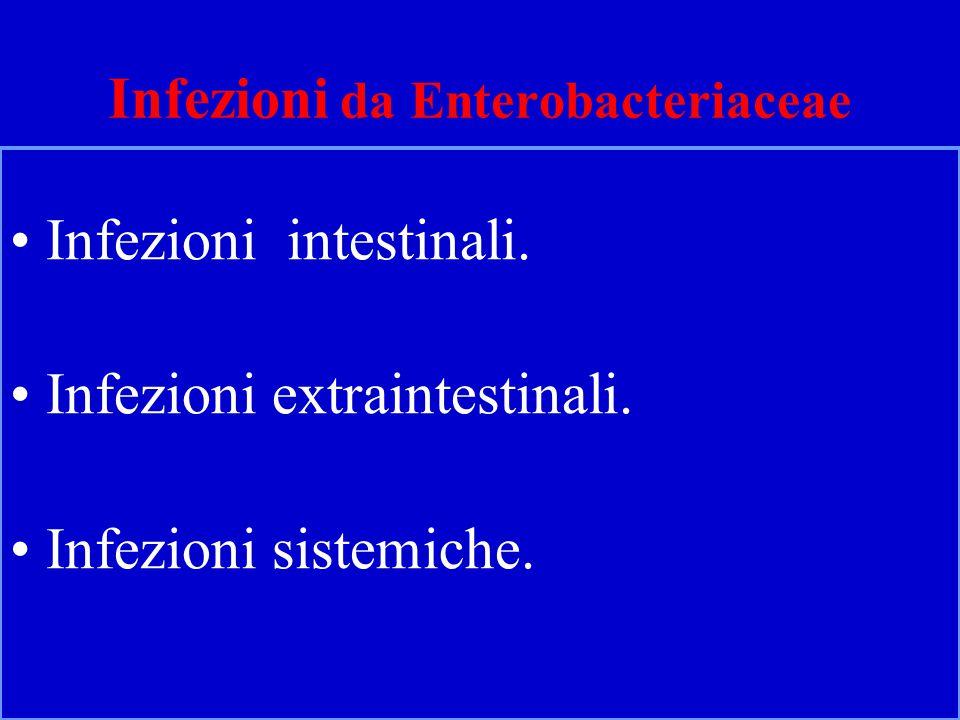 Infezioni da Enterobacteriaceae Infezioni intestinali.