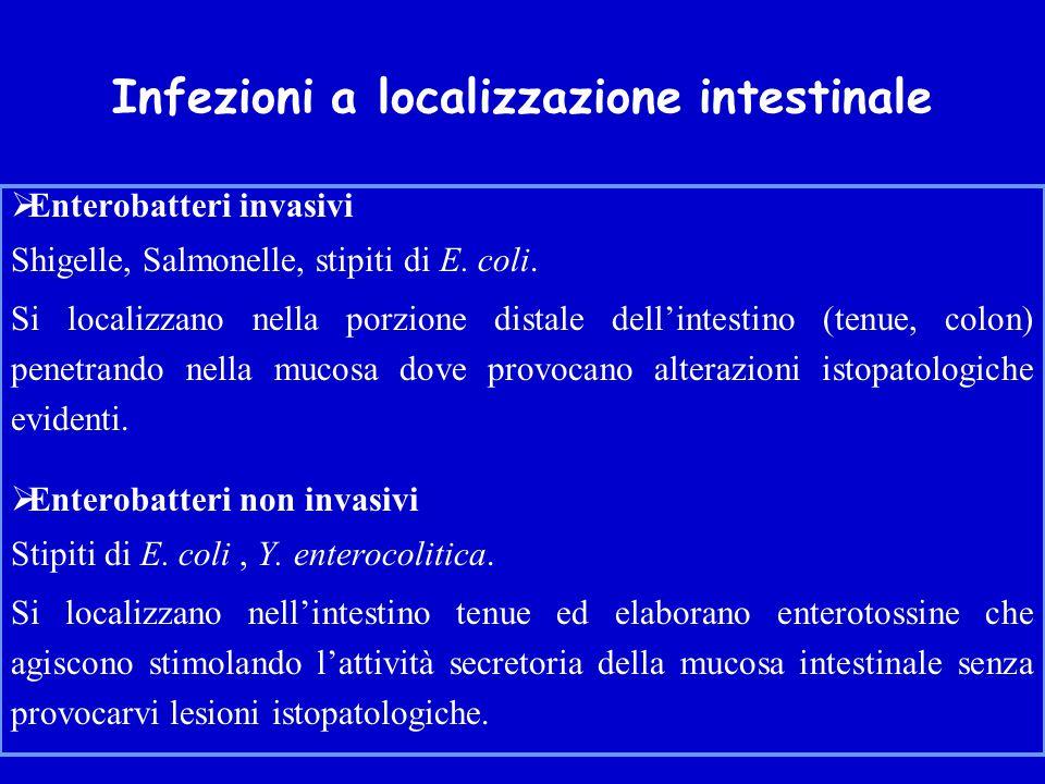 Infezioni a localizzazione intestinale  Enterobatteri invasivi Shigelle, Salmonelle, stipiti di E.