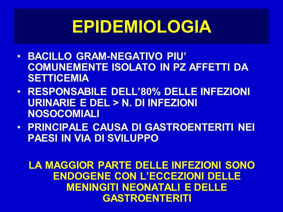 EPIDEMIOLOGIA BACILLO GRAM-NEGATIVO PIU' COMUNEMENTE ISOLATO IN PZ AFFETTI DA SETTICEMIA RESPONSABILE DELL'80% DELLE INFEZIONI URINARIE E DEL > N.