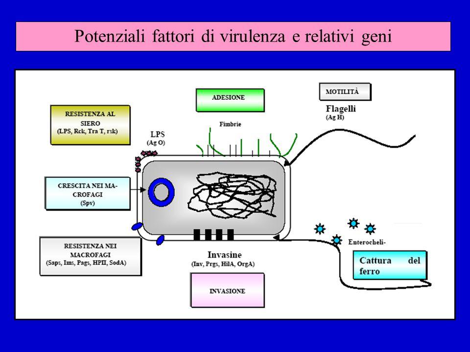 Potenziali fattori di virulenza e relativi geni