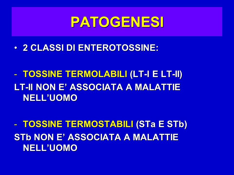 PATOGENESI 2 CLASSI DI ENTEROTOSSINE:2 CLASSI DI ENTEROTOSSINE: -TOSSINE TERMOLABILI (LT-I E LT-II) LT-II NON E' ASSOCIATA A MALATTIE NELL'UOMO -TOSSINE TERMOSTABILI (STa E STb) STb NON E' ASSOCIATA A MALATTIE NELL'UOMO