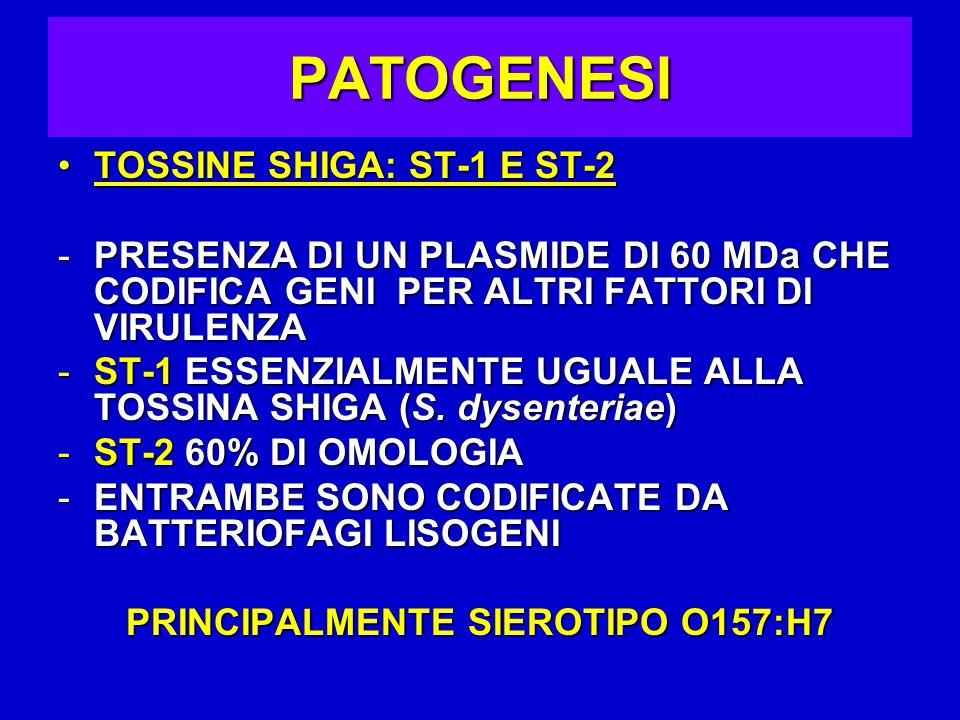 PATOGENESI TOSSINE SHIGA: ST-1 E ST-2TOSSINE SHIGA: ST-1 E ST-2 -PRESENZA DI UN PLASMIDE DI 60 MDa CHE CODIFICA GENI PER ALTRI FATTORI DI VIRULENZA -ST-1 ESSENZIALMENTE UGUALE ALLA TOSSINA SHIGA (S.