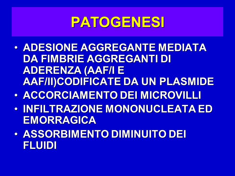 PATOGENESI ADESIONE AGGREGANTE MEDIATA DA FIMBRIE AGGREGANTI DI ADERENZA (AAF/I E AAF/II)CODIFICATE DA UN PLASMIDEADESIONE AGGREGANTE MEDIATA DA FIMBRIE AGGREGANTI DI ADERENZA (AAF/I E AAF/II)CODIFICATE DA UN PLASMIDE ACCORCIAMENTO DEI MICROVILLIACCORCIAMENTO DEI MICROVILLI INFILTRAZIONE MONONUCLEATA ED EMORRAGICAINFILTRAZIONE MONONUCLEATA ED EMORRAGICA ASSORBIMENTO DIMINUITO DEI FLUIDIASSORBIMENTO DIMINUITO DEI FLUIDI