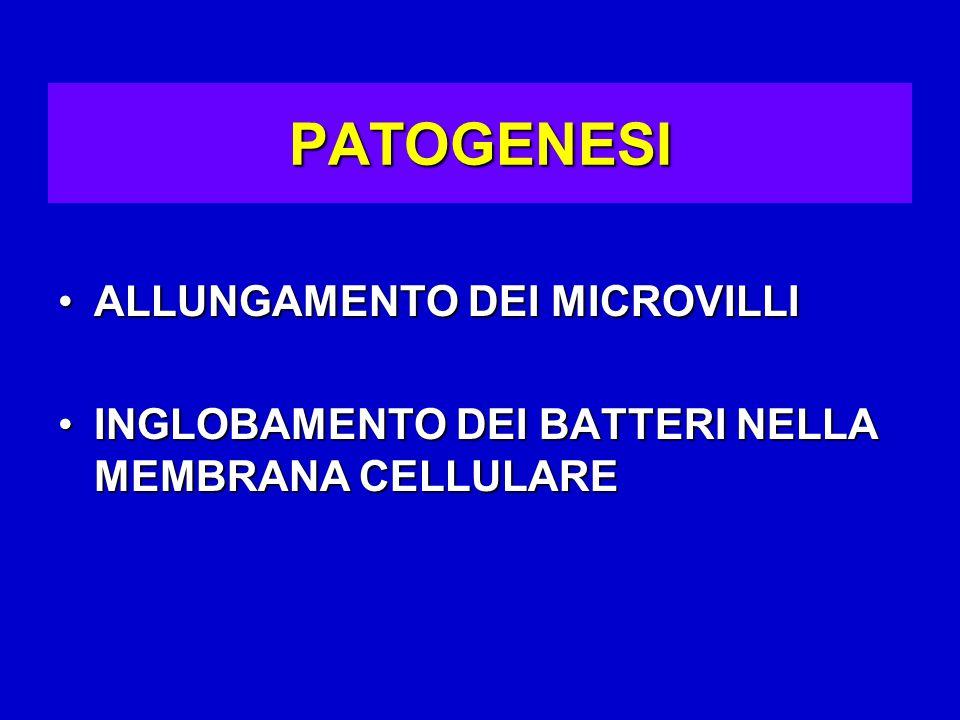 PATOGENESI ALLUNGAMENTO DEI MICROVILLIALLUNGAMENTO DEI MICROVILLI INGLOBAMENTO DEI BATTERI NELLA MEMBRANA CELLULAREINGLOBAMENTO DEI BATTERI NELLA MEMBRANA CELLULARE