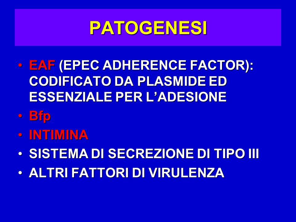 PATOGENESI EAF (EPEC ADHERENCE FACTOR): CODIFICATO DA PLASMIDE ED ESSENZIALE PER L'ADESIONEEAF (EPEC ADHERENCE FACTOR): CODIFICATO DA PLASMIDE ED ESSENZIALE PER L'ADESIONE BfpBfp INTIMINAINTIMINA SISTEMA DI SECREZIONE DI TIPO IIISISTEMA DI SECREZIONE DI TIPO III ALTRI FATTORI DI VIRULENZAALTRI FATTORI DI VIRULENZA