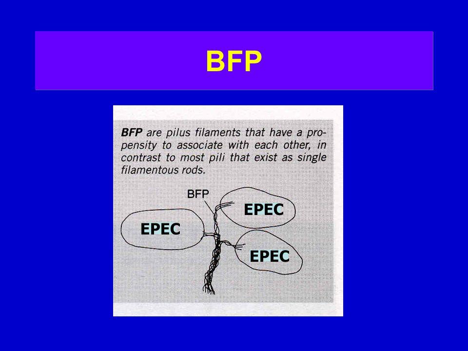 BFP EPEC