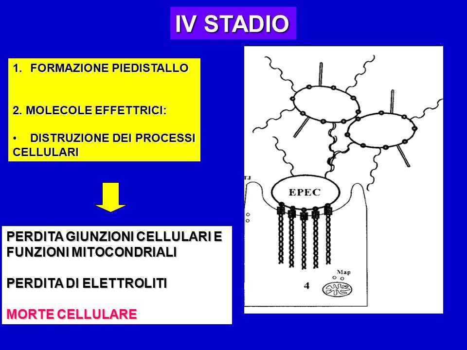 IV STADIO 1.FORMAZIONE PIEDISTALLO 2.