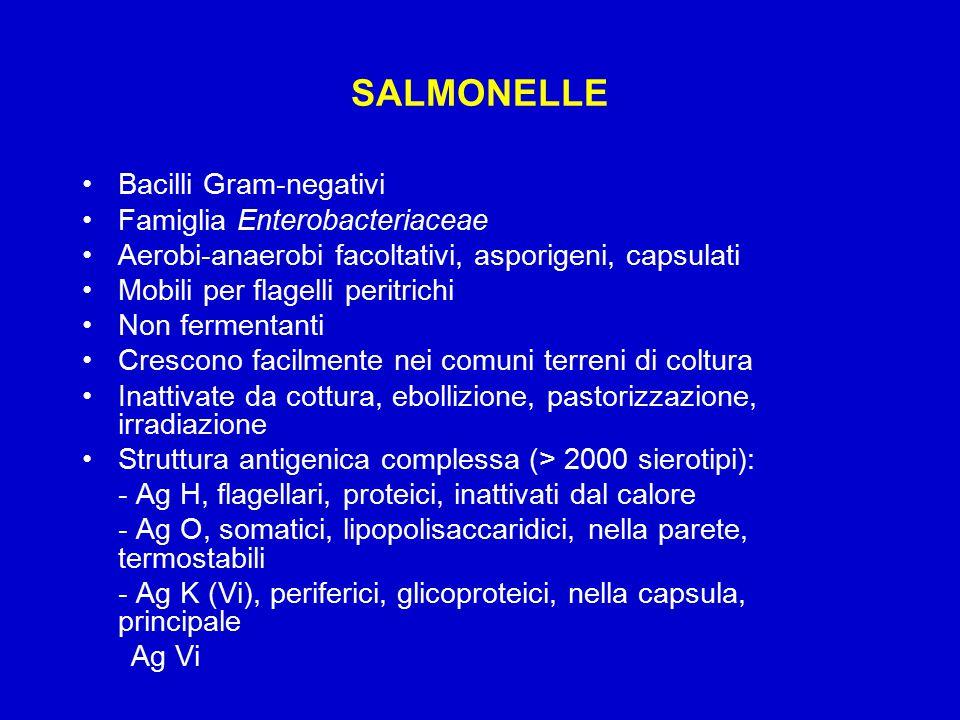 SALMONELLE Bacilli Gram-negativi Famiglia Enterobacteriaceae Aerobi-anaerobi facoltativi, asporigeni, capsulati Mobili per flagelli peritrichi Non fermentanti Crescono facilmente nei comuni terreni di coltura Inattivate da cottura, ebollizione, pastorizzazione, irradiazione Struttura antigenica complessa (> 2000 sierotipi): - Ag H, flagellari, proteici, inattivati dal calore - Ag O, somatici, lipopolisaccaridici, nella parete, termostabili - Ag K (Vi), periferici, glicoproteici, nella capsula, principale Ag Vi